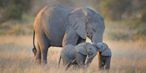 elephant-memoire-du-web