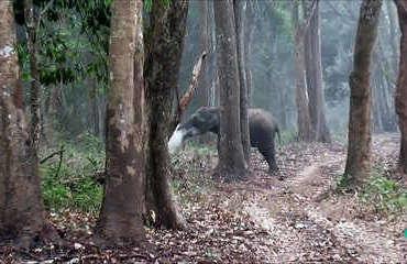 elephant-qui-fume-du-web