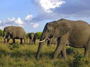 personnalites-elephant-du-web