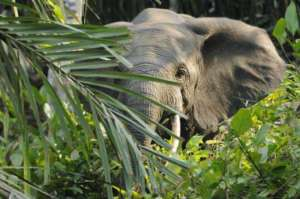 éléphant-peur-du-web