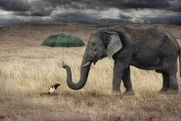 elephant-souris