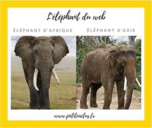 éléphant-du-web-asie-afrique