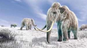 Mammouth-elephant-du-web