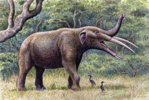 gomphotherium-ancetre-elephant-mammouth