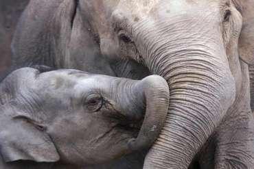 importation-trophee-chasse-usa-elephant-du-web