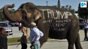 trump-usa-importation-trophee-chasse-elephant-du-web
