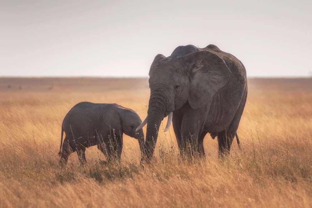 marde-elephants-sauvegarde