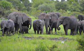 reserve-elephant-massacre-botswana